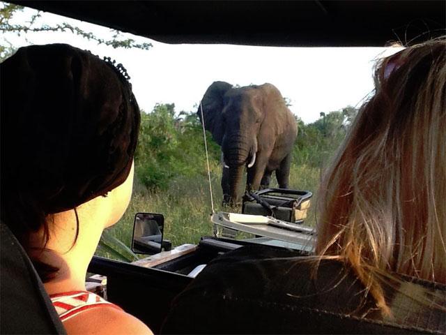 elefant_inifran_bil