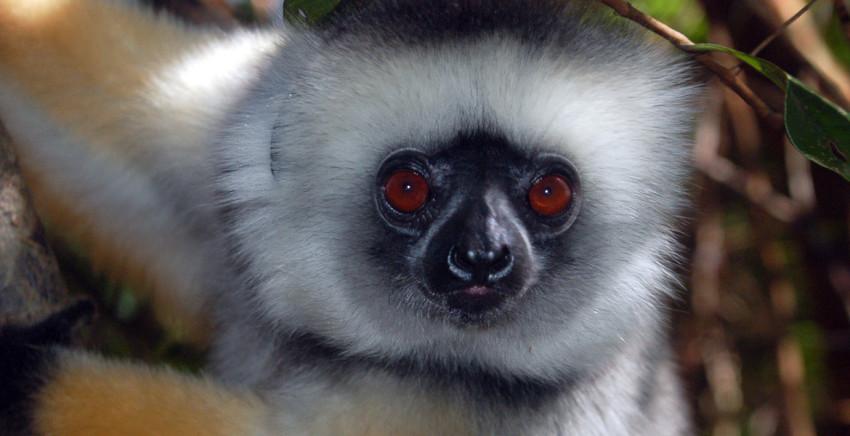RosaBussarna_Madagaskar03