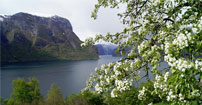 Aurlandfjorden01_202
