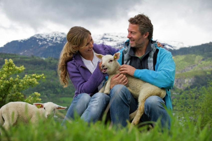 VisitNorway_Sheep1500