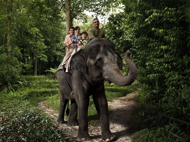 elefanter650