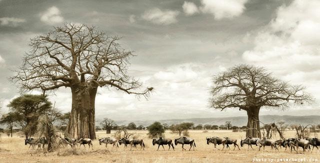 afrikaa640