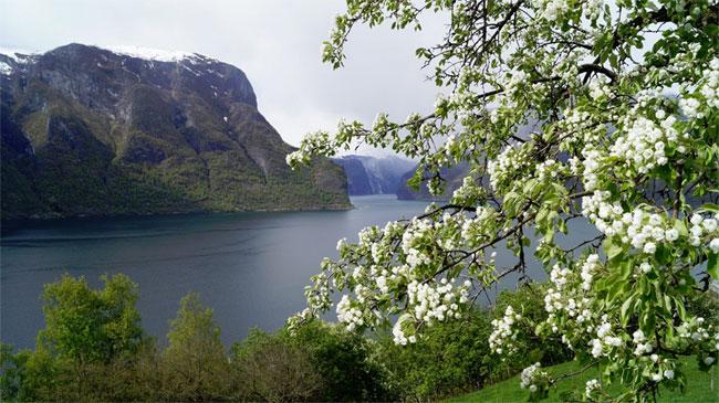 Aurlandfjorden03_650